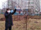 Яблоневая аллея к юбилею